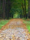 秋天森林路径 免版税库存图片