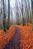 秋天森林路 库存图片