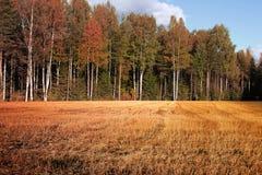 秋天森林边缘 库存照片