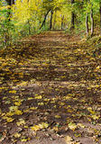 秋天森林运输路线叶子 库存照片