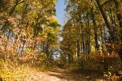 秋天森林道路,南非 库存图片
