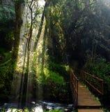 秋天森林道路,南非 免版税库存照片
