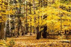 秋天森林道路 免版税图库摄影