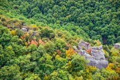秋天森林顶视图  库存图片