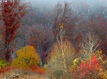 秋天森林颜色 库存图片
