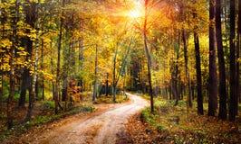 秋天森林风景在晴朗的明亮的天 生动的光束通过在森林五颜六色的自然的树在秋季 免版税库存图片