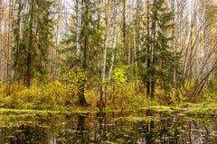 秋天森林风景在森林湖的水的前面 免版税库存照片