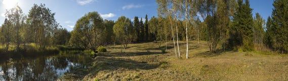 秋天森林风景的全景 免版税库存图片