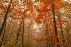 秋天森林风景风景  免版税库存图片