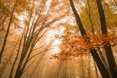 秋天森林风景风景  库存图片