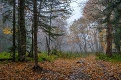 秋天森林风景风景  免版税库存照片