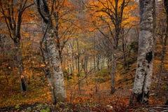 秋天森林风景风景  库存照片