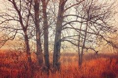 秋天森林风景-在有雾的天气的树 库存图片