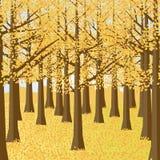 秋天森林风景 秋天庭院 免版税图库摄影