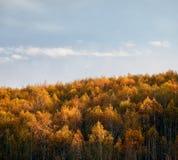 秋天森林风景 免版税库存图片