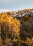 秋天森林风景 库存照片