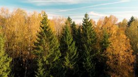 秋天森林鸟瞰图有绿色和黄色树的 股票录像