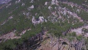 秋天森林鸟瞰图 射击 具球果林木背景有雾的狂放的森林使旅行概念环境美化 顶上 影视素材