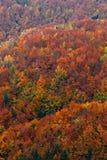 秋天森林,在橙色小山,橙色橡木,加拿大桦,绿色云杉,漂泊瑞士国家公园,捷克R的许多树 免版税库存图片