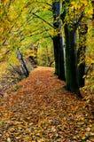 秋天森林,垂直 免版税图库摄影