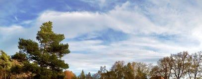 秋天森林,德国 库存图片