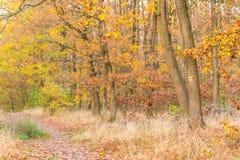 秋天森林,橙色秋天颜色,在橙色和棕色或者金黄颜色的叶子 免版税库存照片