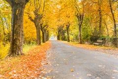 秋天森林,黄色叶子,秋天在公园 免版税库存照片