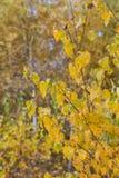 秋天森林离开黄色 免版税库存照片