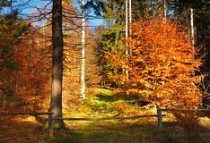 秋天森林结束了与老木篱芭和酒吧的方式 在树的五颜六色的叶子, 免版税库存图片