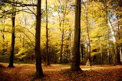 秋天森林 免版税库存图片