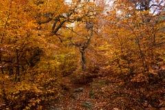 秋天森林32 库存照片