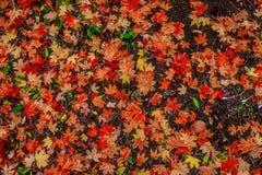 秋天森林12 库存图片