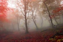 秋天森林14 库存照片