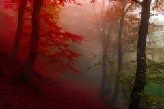 秋天森林12 库存照片