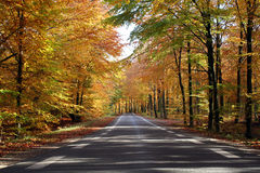 秋天森林 库存图片