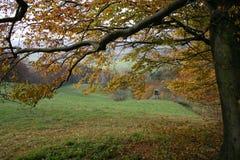 秋天森林 库存照片