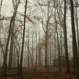 秋天森林 免版税库存照片