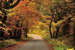 秋天森林gisburn lancashire树荫 免版税库存图片