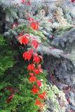 秋天植物和树 免版税库存图片