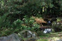 秋天植物园 图库摄影