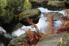 秋天植物园 库存照片