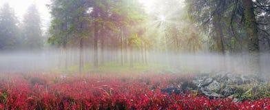 秋天植物的雾庭院基辅做照片乌克兰木头 免版税库存图片
