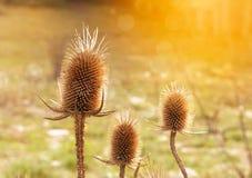 秋天植物 库存照片