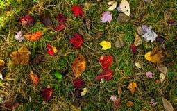 秋天楼层森林 免版税库存照片