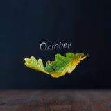 秋天概念查出的白色 10月 落的叶子橡木 黑暗的背景和木表面 库存图片