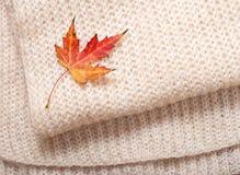 秋天概念查出的白色 库存照片