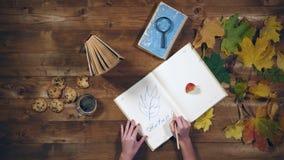 秋天概念顶视图 书,槭树在老木桌离开,茶 妇女在笔记本的文字笔记 免版税库存图片