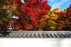 秋天槭树东方背景和传统日本墙壁加冠了与瓦片 免版税库存图片
