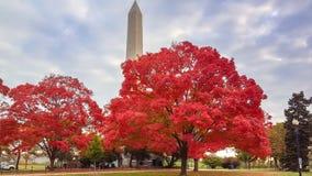 秋天槭树华盛顿特区纪念碑 免版税库存照片