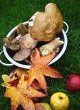 秋天槭树叶子、蘑菇和苹果 图库摄影
